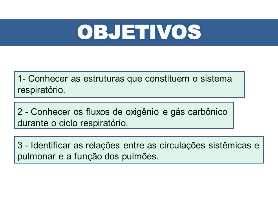 1- Conhecer as estruturas que constituem o sistema respiratório. 2 - Conhecer os fluxos de oxigênio e gás carbônico durante o ciclo respiratório. 3 -