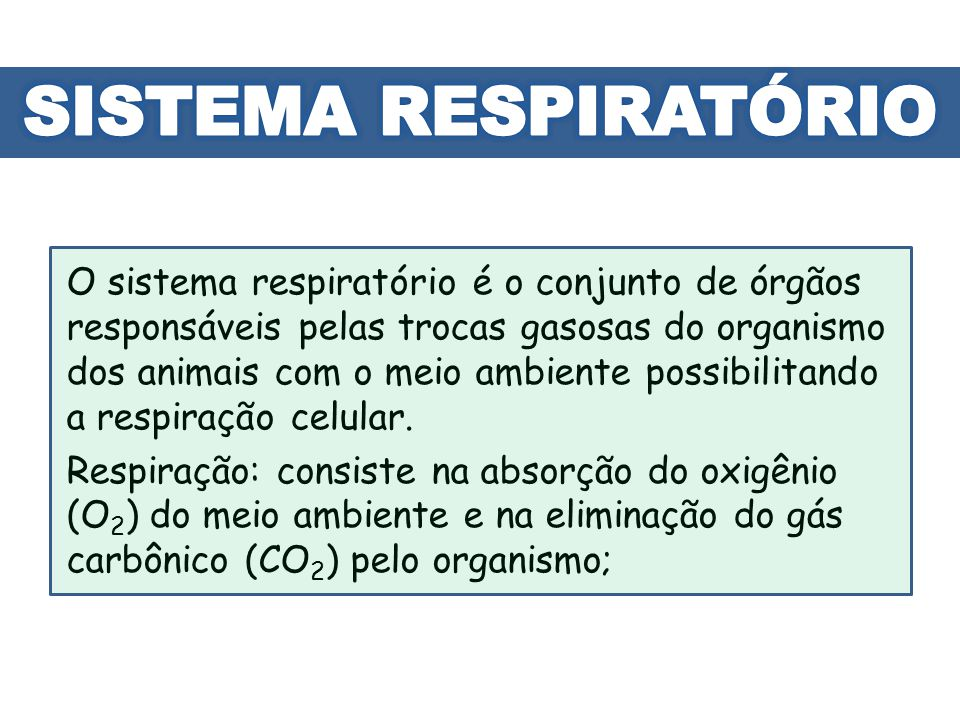 O sistema respiratório é o conjunto de órgãos responsáveis pelas trocas gasosas do organismo dos animais com o meio ambiente possibilitando a respiraç