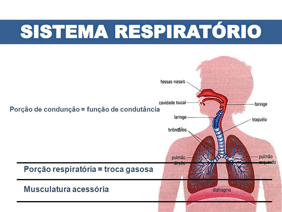 Trato Respiratório Superior: Fora da cavidade torácica - Nariz - Faringe - Laringe - Parte superior da traquéia Trato Respiratório Inferior: Dentro da cavidade torácica - Parte inferior da traquéia - Brônquios - Bronquíolos - Alvéolos - Pulmões - Pleura - Músculos que formam a cavidade