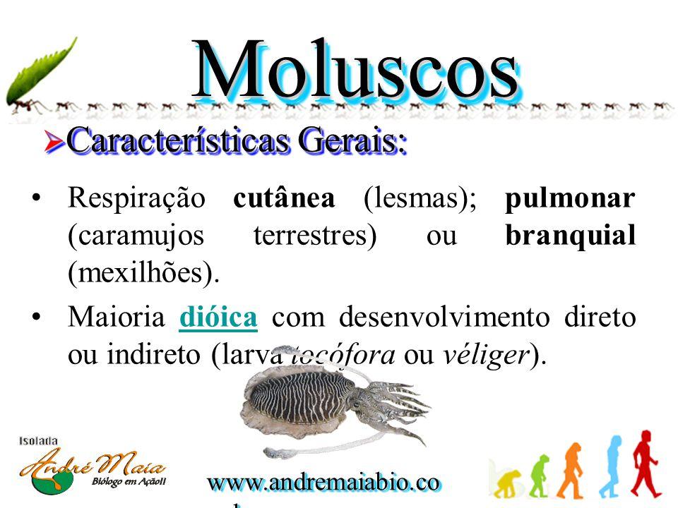 www.andremaiabio.co m.br MoluscosMoluscos  Características Gerais: •Respiração cutânea (lesmas); pulmonar (caramujos terrestres) ou branquial (mexilh