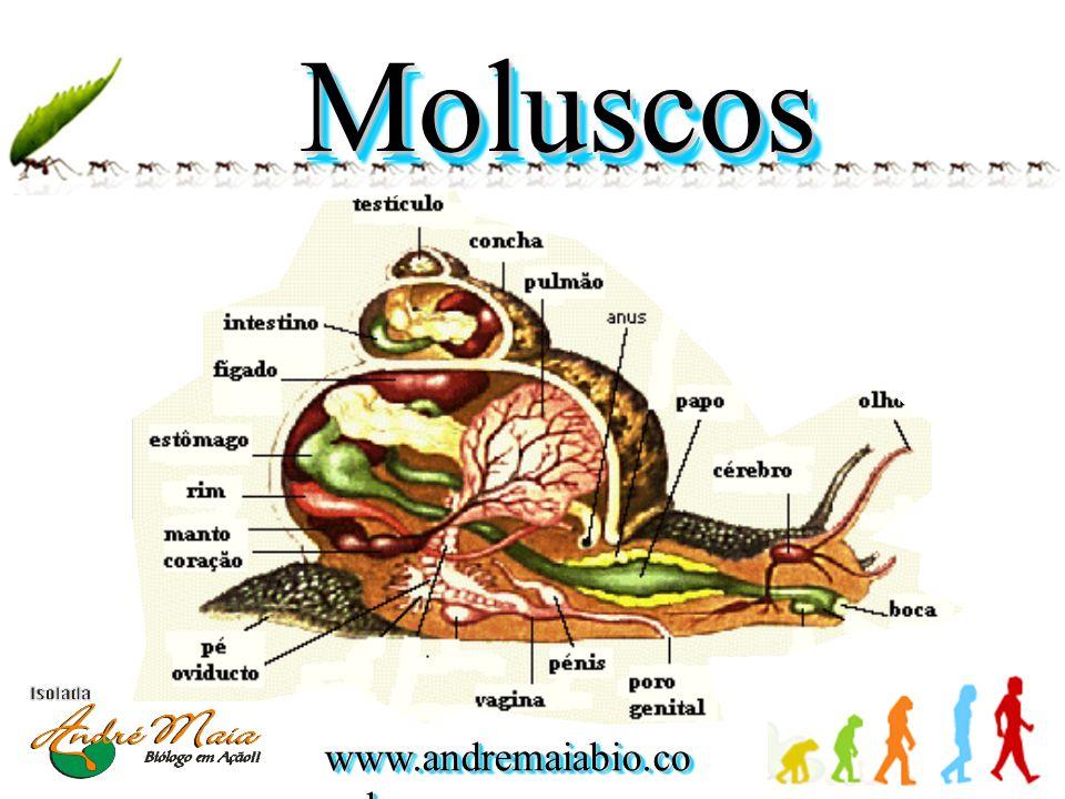 www.andremaiabio.co m.br MoluscosMoluscos