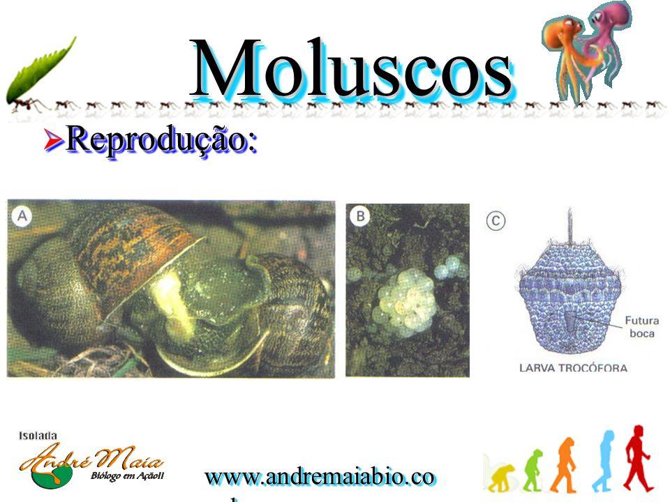 MoluscosMoluscos  Reprodução: