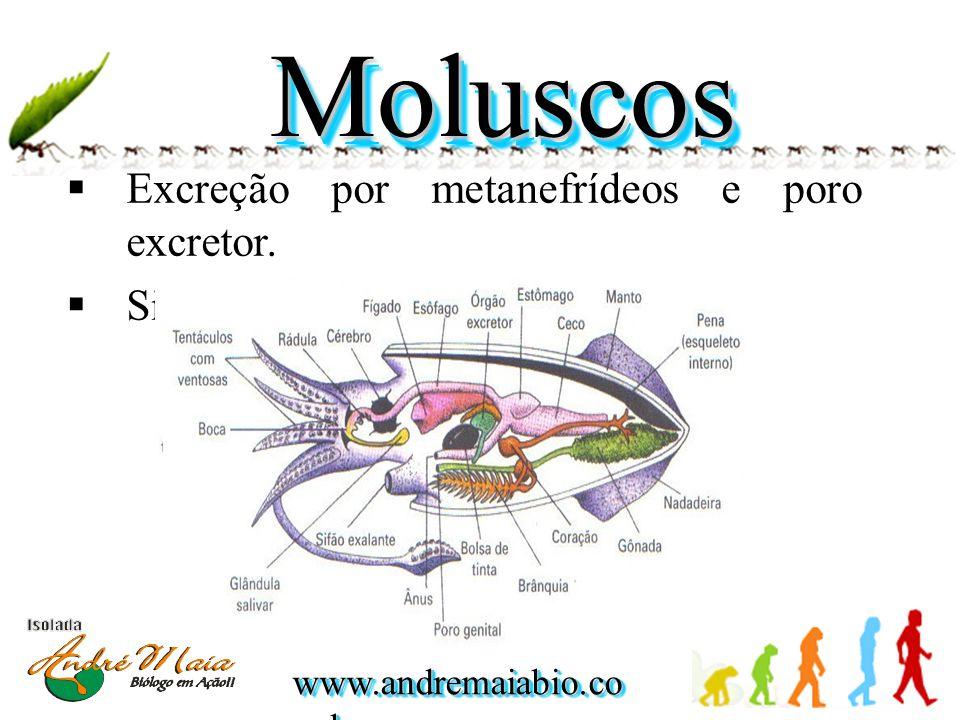 www.andremaiabio.co m.br MoluscosMoluscos  Excreção por metanefrídeos e poro excretor.  Sistema nervoso ganglionar.