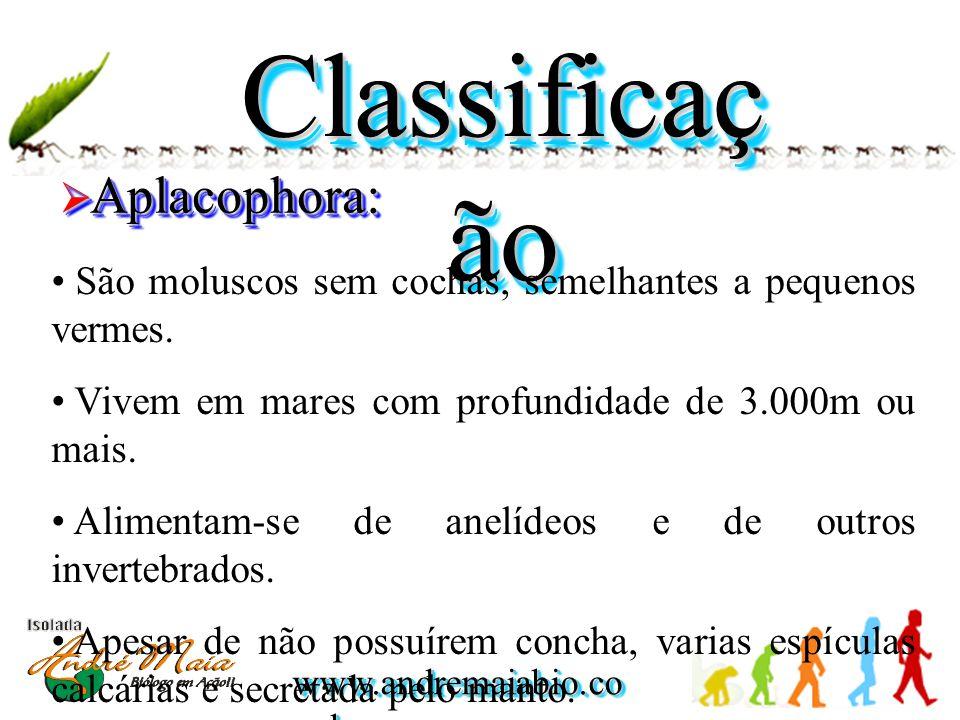 www.andremaiabio.co m.br Classificaç ão  Aplacophora: • São moluscos sem cochas, semelhantes a pequenos vermes. • Vivem em mares com profundidade de