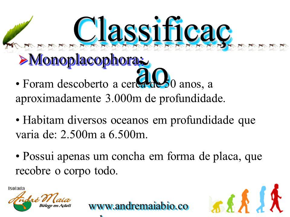 www.andremaiabio.co m.br Classificaç ão  Monoplacophora: • Foram descoberto a cerca de 50 anos, a aproximadamente 3.000m de profundidade. • Habitam d