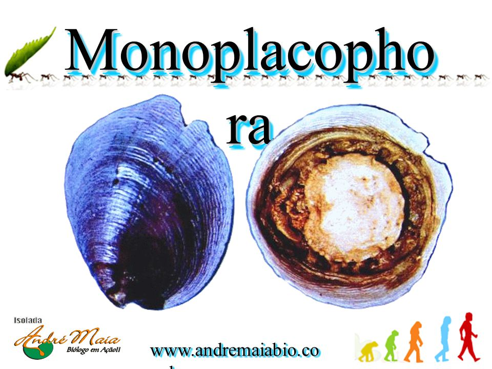 www.andremaiabio.co m.br Monoplacopho ra