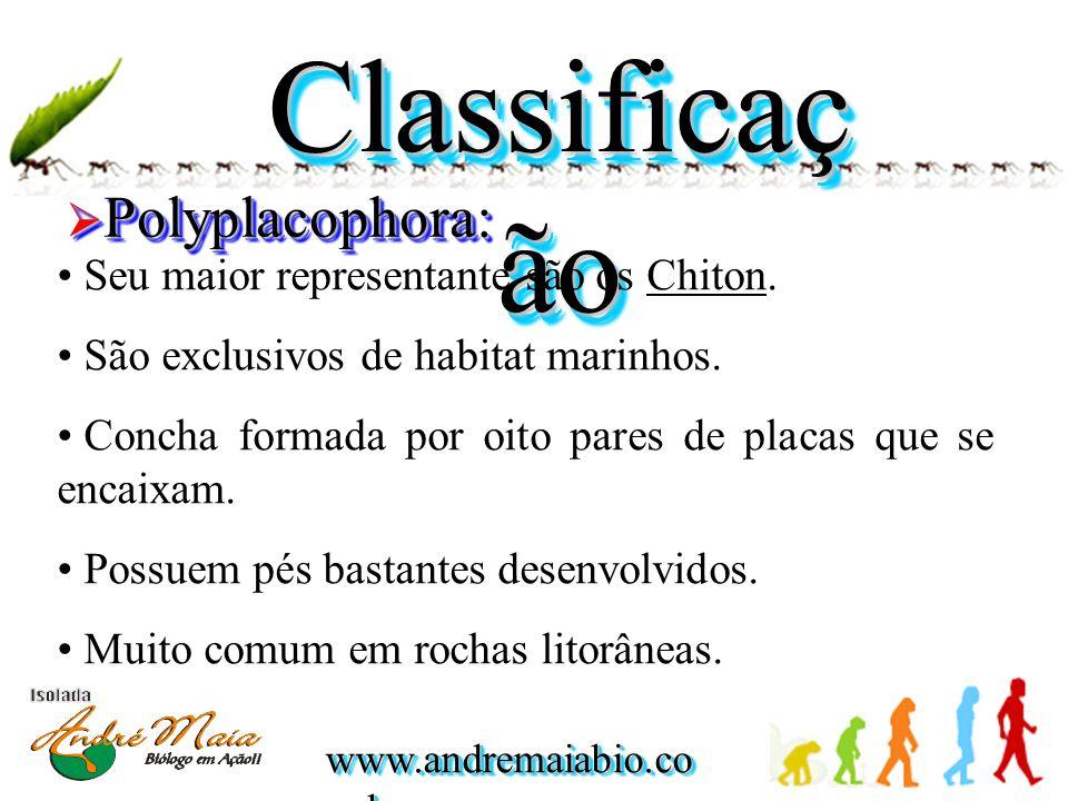 www.andremaiabio.co m.br Classificaç ão  Polyplacophora: • Seu maior representante são os Chiton. • São exclusivos de habitat marinhos. • Concha form