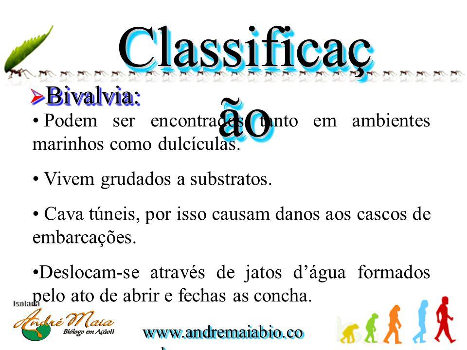 www.andremaiabio.co m.br Classificaç ão  Bivalvia: • Podem ser encontrados tanto em ambientes marinhos como dulcículas. • Vivem grudados a substratos