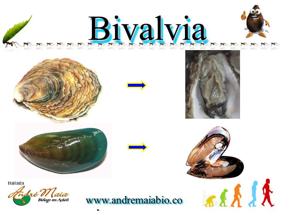 www.andremaiabio.co m.br BivalviaBivalvia