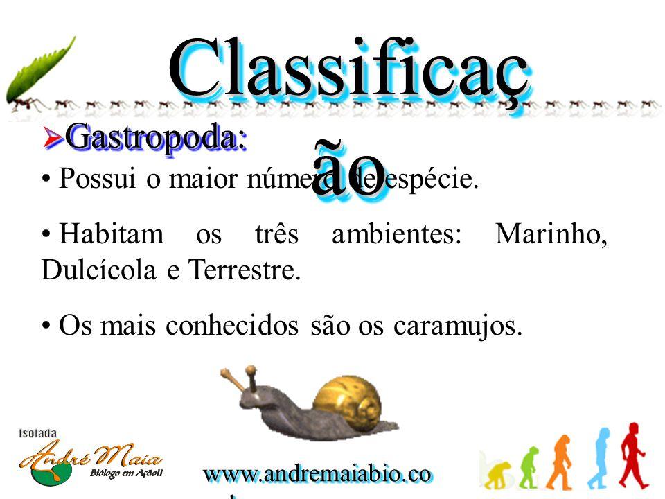 Classificaç ão  Gastropoda: • Possui o maior número de espécie. • Habitam os três ambientes: Marinho, Dulcícola e Terrestre. • Os mais conhecidos são