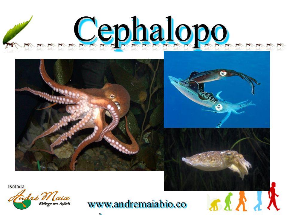 www.andremaiabio.co m.br Cephalopo da