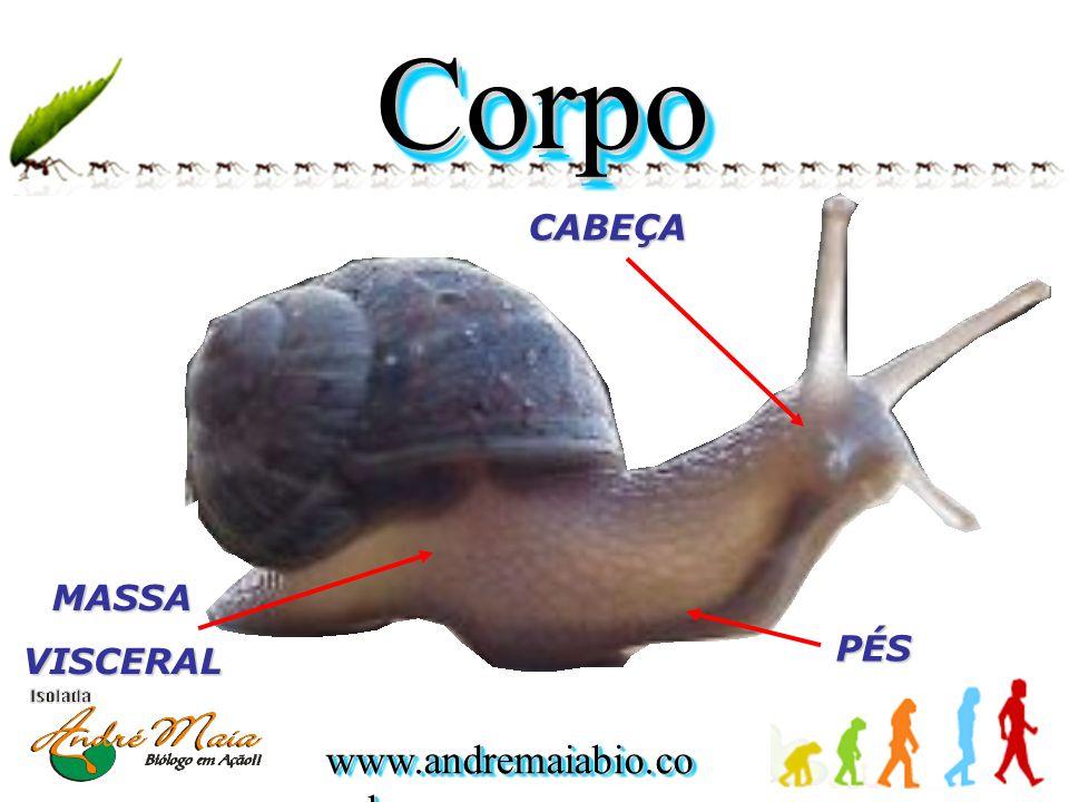 www.andremaiabio.co m.br Classificaç ão  Bivalvia: • Podem ser encontrados tanto em ambientes marinhos como dulcículas.