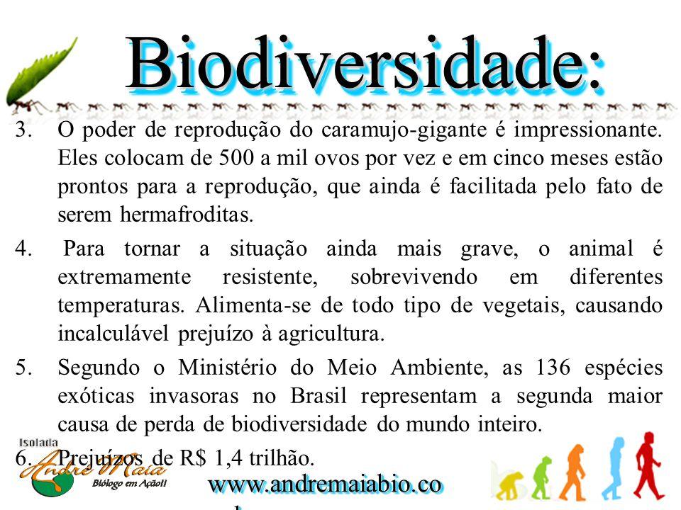 www.andremaiabio.co m.br  O poder de reprodução do caramujo-gigante é impressionante. Eles colocam de 500 a mil ovos por vez e em cinco meses estão