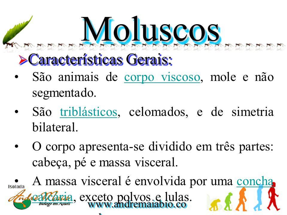 www.andremaiabio.co m.br MoluscosMoluscos  Características Gerais: •Na maioria são encontrados no mar, fixos, nadando, ou enterrado na areia.