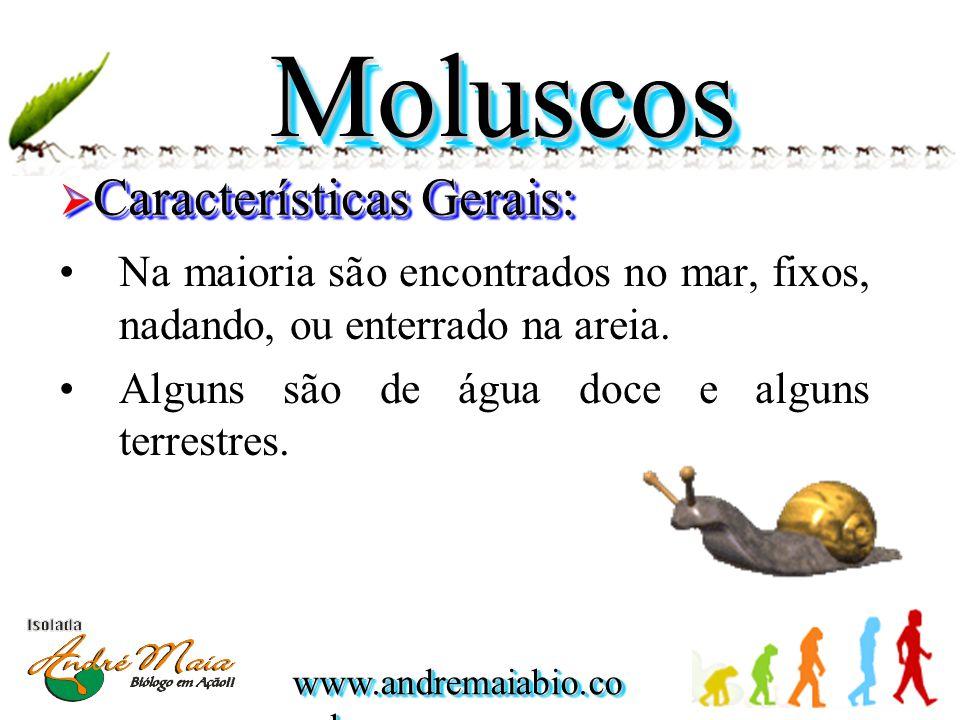 www.andremaiabio.co m.br MoluscosMoluscos  Características Gerais: •Na maioria são encontrados no mar, fixos, nadando, ou enterrado na areia. •Alguns