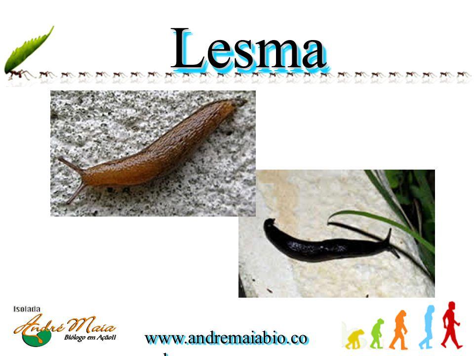 www.andremaiabio.co m.br GastropodaGastropoda CaracolCaracol LesmaLesmaCaramujoCaramujo