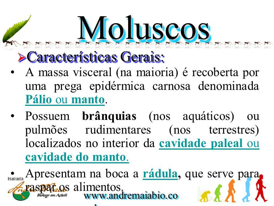 www.andremaiabio.co m.br MoluscosMoluscos  Características Gerais: •Respiração cutânea (lesmas); pulmonar (caramujos terrestres) ou branquial (mexilhões).