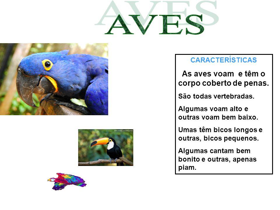 CARACTERÍSTICAS As aves voam e têm o corpo coberto de penas. São todas vertebradas. Algumas voam alto e outras voam bem baixo. Umas têm bicos longos e
