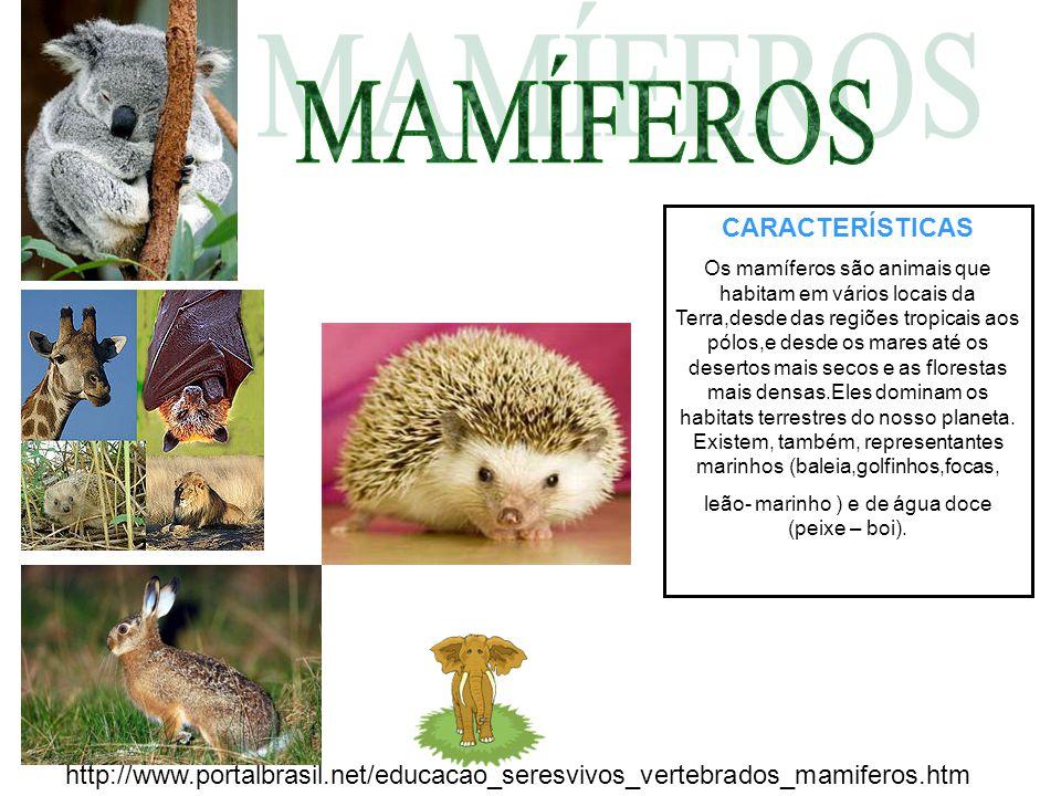 CARACTERÍSTICAS Os mamíferos são animais que habitam em vários locais da Terra,desde das regiões tropicais aos pólos,e desde os mares até os desertos mais secos e as florestas mais densas.Eles dominam os habitats terrestres do nosso planeta.