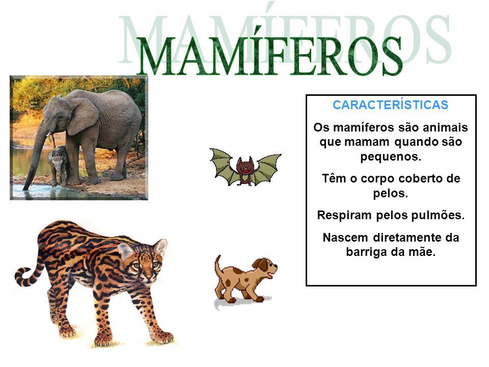 CARACTERÍSTICAS Os mamíferos são animais que mamam quando são pequenos. Têm o corpo coberto de pelos. Respiram pelos pulmões. Nascem diretamente da ba