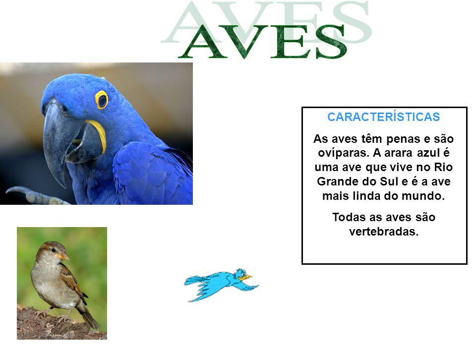 CARACTERÍSTICAS As aves têm penas e são ovíparas. A arara azul é uma ave que vive no Rio Grande do Sul e é a ave mais linda do mundo. Todas as aves sã