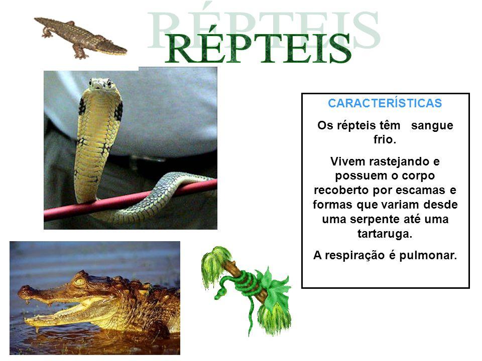 CARACTERÍSTICAS Os répteis têm sangue frio. Vivem rastejando e possuem o corpo recoberto por escamas e formas que variam desde uma serpente até uma ta