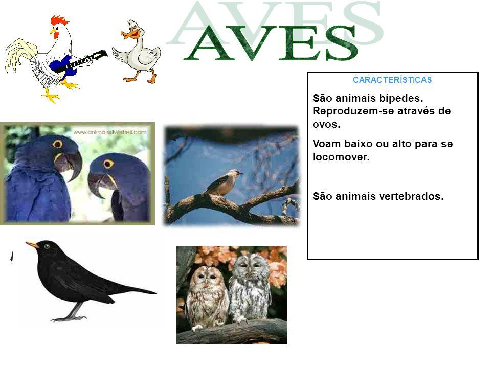 CARACTERÍSTICAS São animais bípedes. Reproduzem-se através de ovos. Voam baixo ou alto para se locomover. São animais vertebrados.