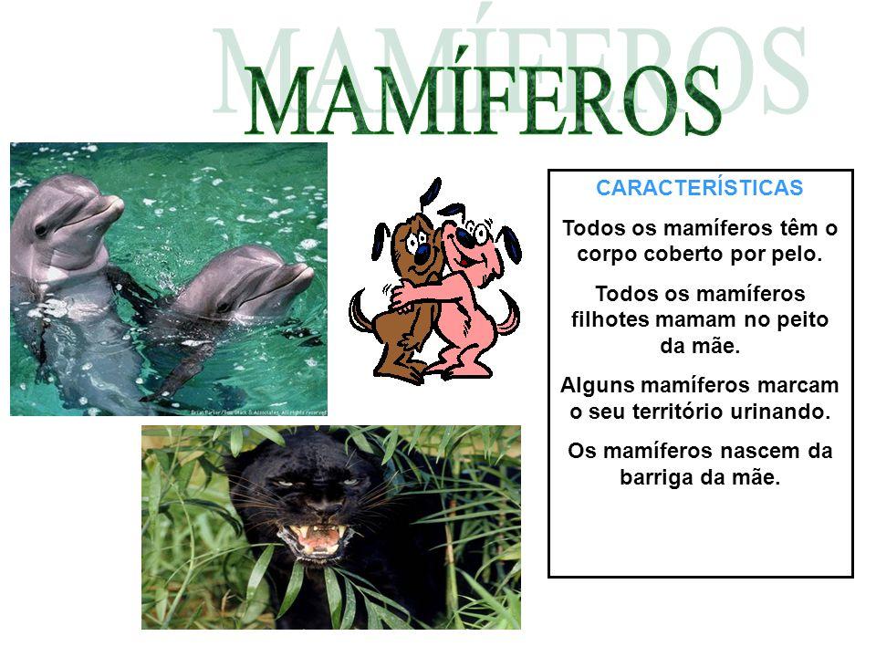 CARACTERÍSTICAS Todos os mamíferos têm o corpo coberto por pelo. Todos os mamíferos filhotes mamam no peito da mãe. Alguns mamíferos marcam o seu terr