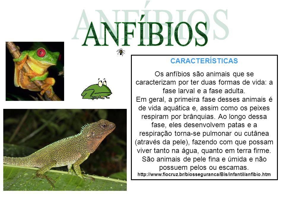 CARACTERÍSTICAS Os anfíbios são animais que se caracterizam por ter duas formas de vida: a fase larval e a fase adulta.