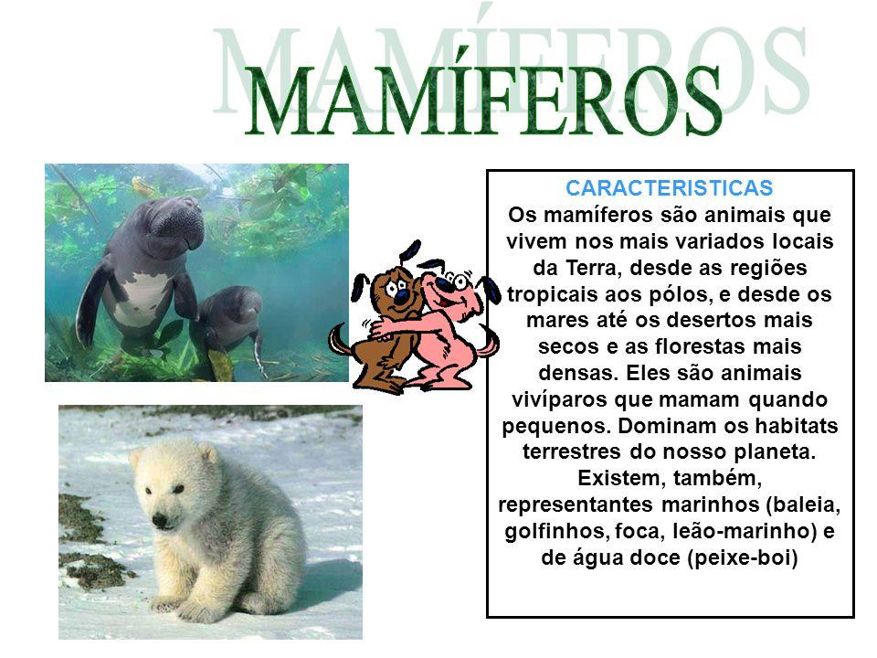CARACTERISTICAS Os mamíferos são animais que vivem nos mais variados locais da Terra, desde as regiões tropicais aos pólos, e desde os mares até os desertos mais secos e as florestas mais densas.