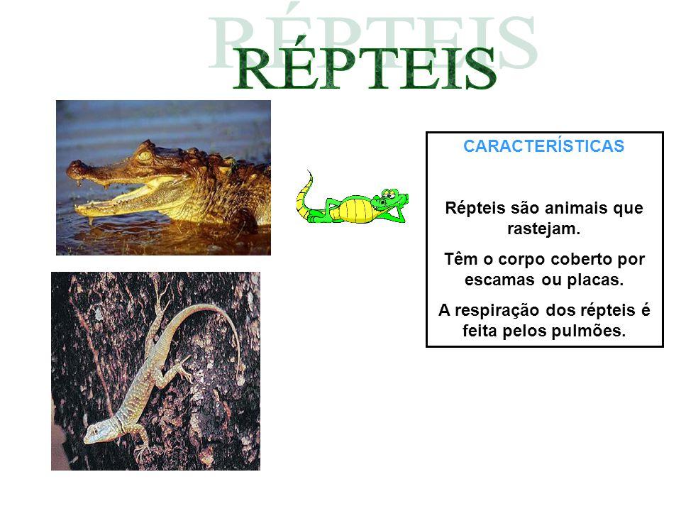 CARACTERÍSTICAS Répteis são animais que rastejam. Têm o corpo coberto por escamas ou placas. A respiração dos répteis é feita pelos pulmões.