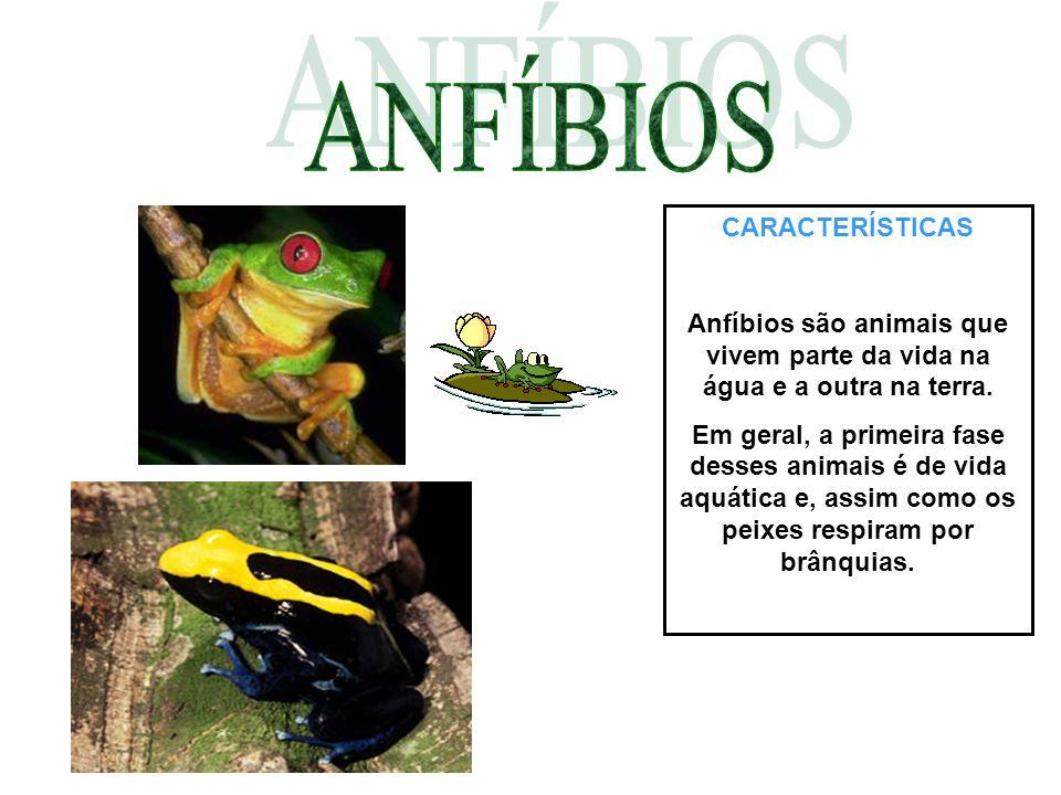 CARACTERÍSTICAS Anfíbios são animais que vivem parte da vida na água e a outra na terra. Em geral, a primeira fase desses animais é de vida aquática e