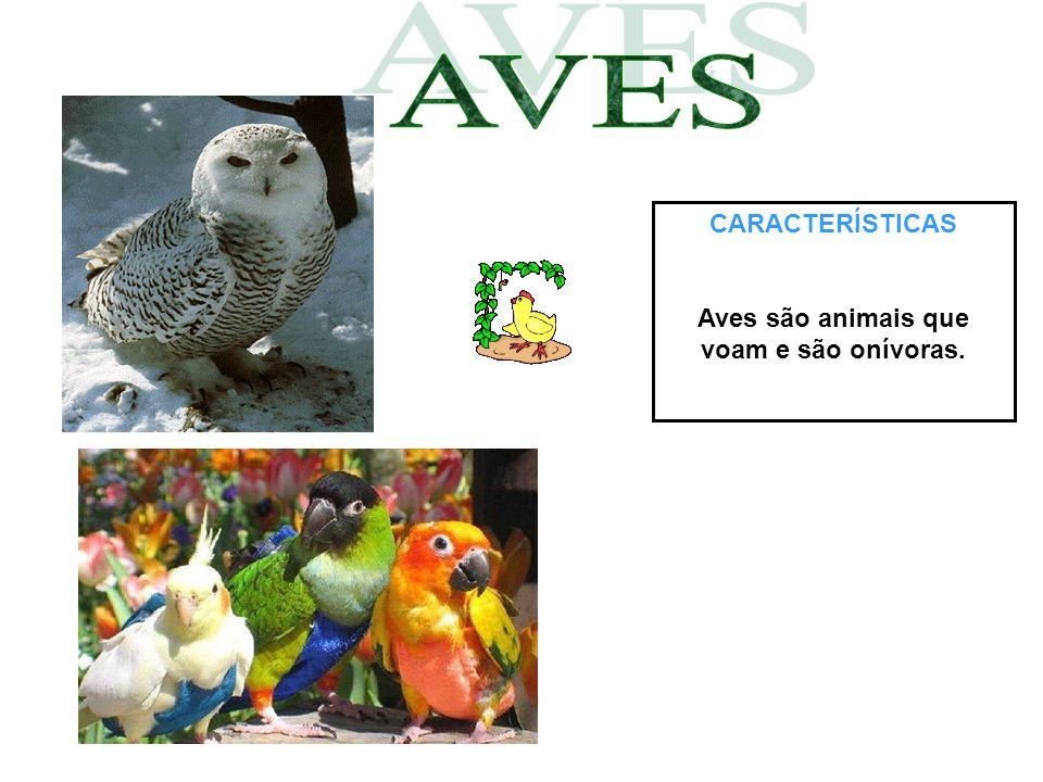 CARACTERÍSTICAS Aves são animais que voam e são onívoras.