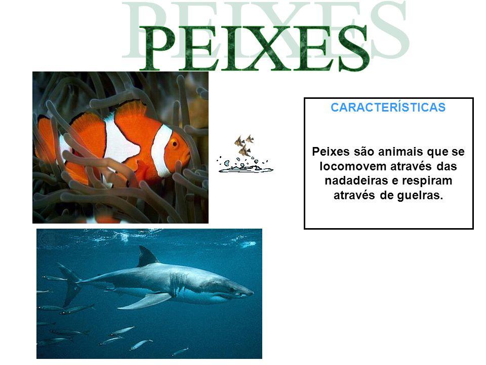 CARACTERÍSTICAS Peixes são animais que se locomovem através das nadadeiras e respiram através de guelras.