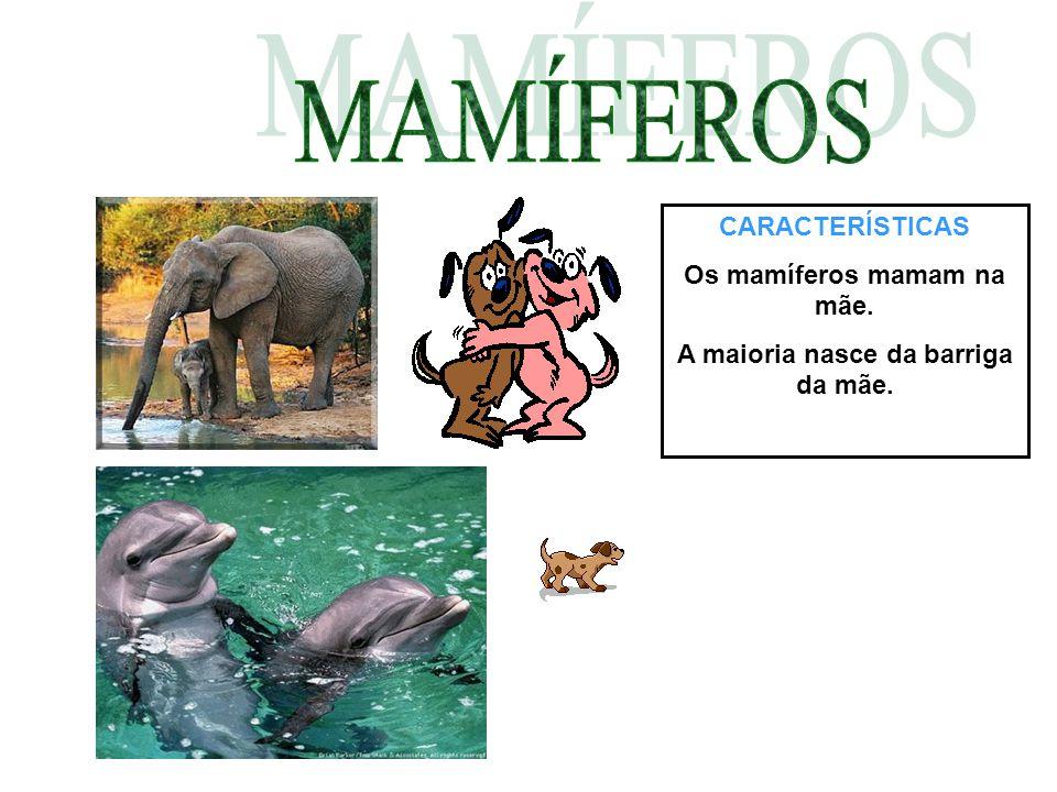 CARACTERÍSTICAS Os mamíferos mamam na mãe. A maioria nasce da barriga da mãe.