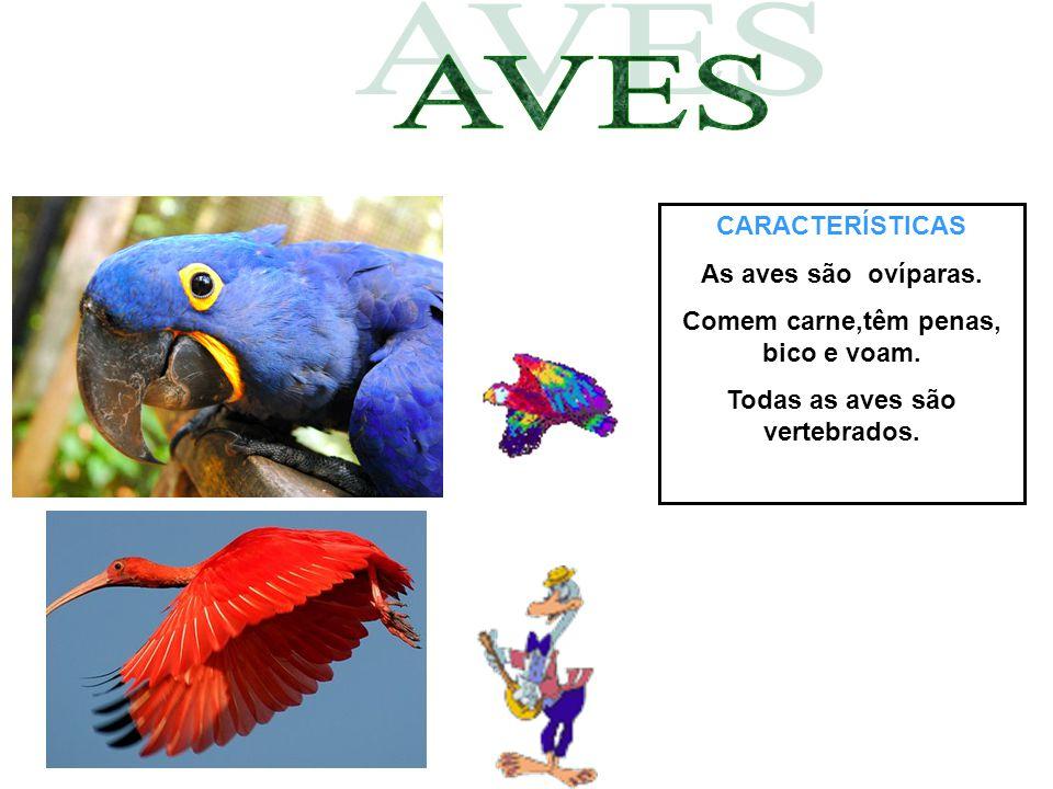CARACTERÍSTICAS As aves são ovíparas. Comem carne,têm penas, bico e voam. Todas as aves são vertebrados.