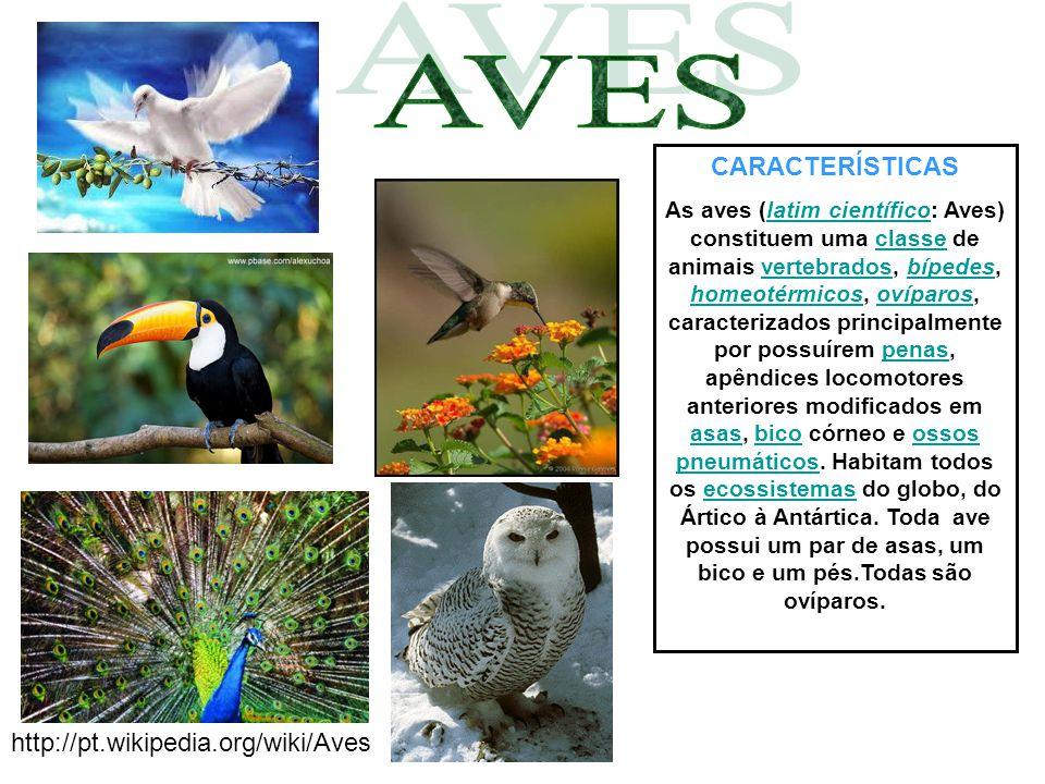 CARACTERÍSTICAS Eles vivem no ambiente terrestre e aquático.