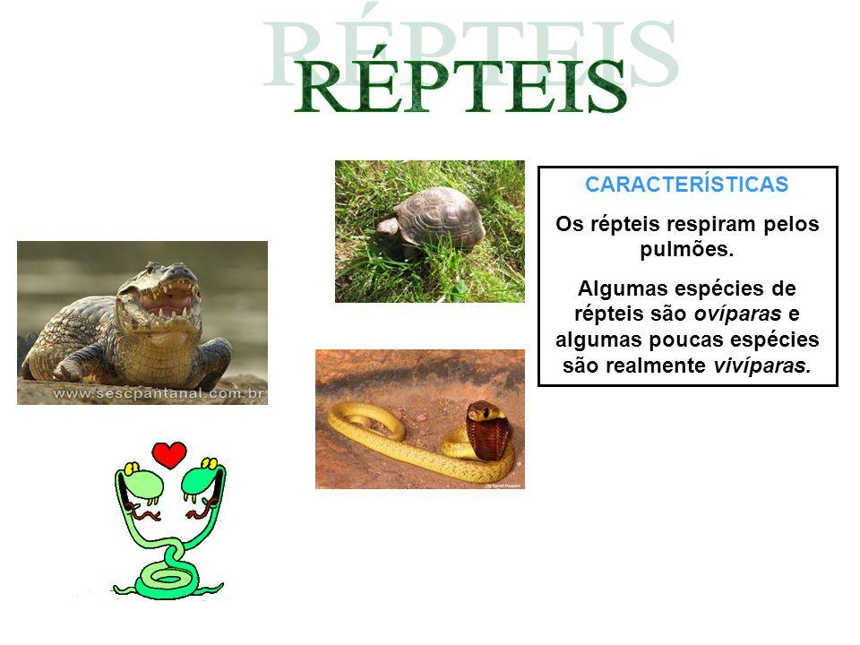 CARACTERÍSTICAS Os répteis respiram pelos pulmões. Algumas espécies de répteis são ovíparas e algumas poucas espécies são realmente vivíparas.
