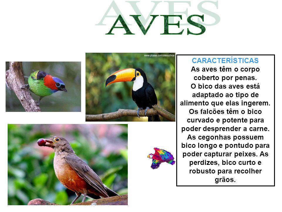 CARACTERÍSTICAS As aves têm o corpo coberto por penas. O bico das aves está adaptado ao tipo de alimento que elas ingerem. Os falcões têm o bico curva