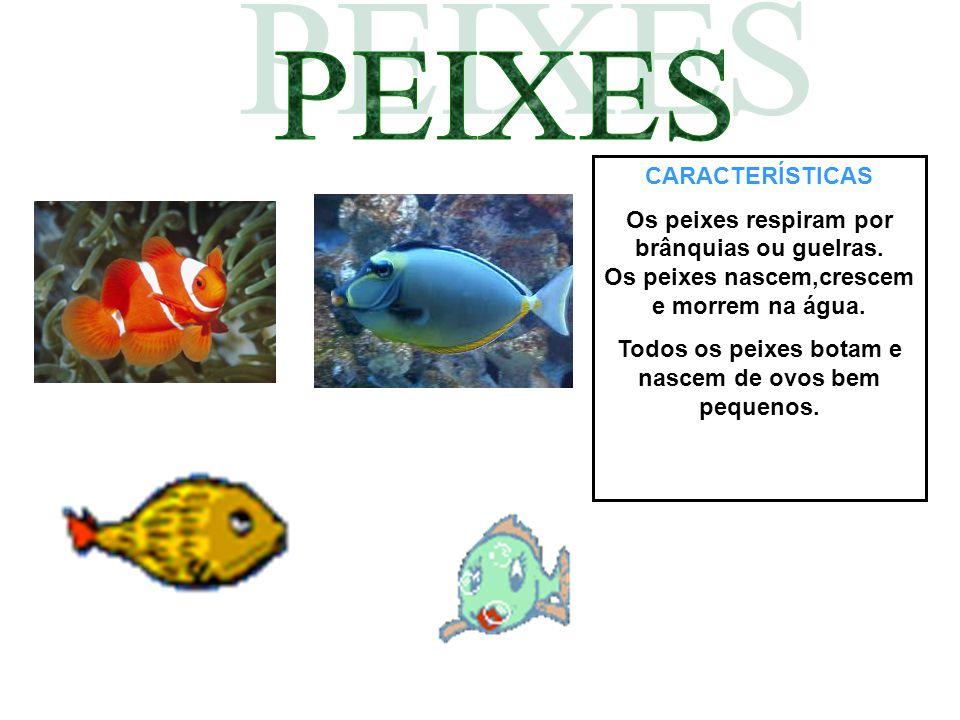 CARACTERÍSTICAS Os peixes respiram por brânquias ou guelras. Os peixes nascem,crescem e morrem na água. Todos os peixes botam e nascem de ovos bem peq