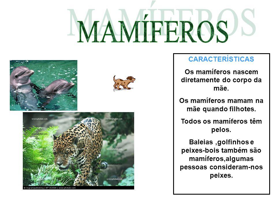 CARACTERÍSTICAS Os mamíferos nascem diretamente do corpo da mãe. Os mamíferos mamam na mãe quando filhotes. Todos os mamíferos têm pelos. Baleias,golf