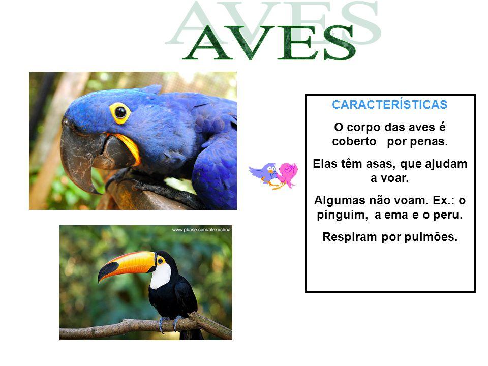 CARACTERÍSTICAS O corpo das aves é coberto por penas. Elas têm asas, que ajudam a voar. Algumas não voam. Ex.: o pinguim, a ema e o peru. Respiram por