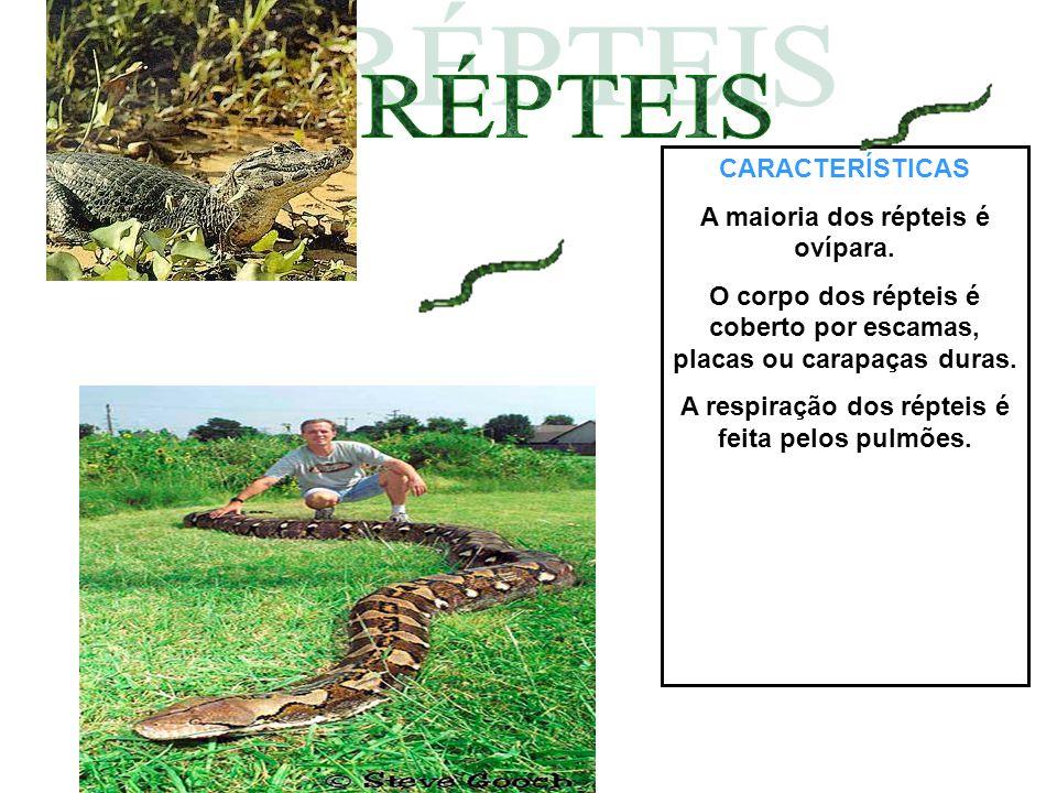 CARACTERÍSTICAS Anfíbios são animais que vivem parte da vida na água e a outra na terra.