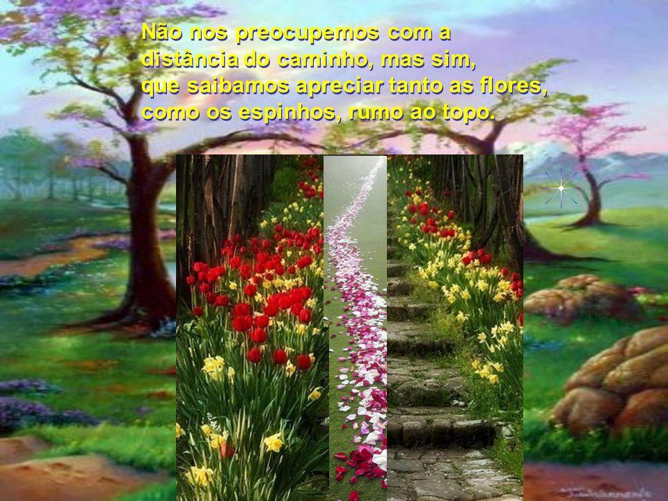 Não nos preocupemos com a distância do caminho, mas sim, que saibamos apreciar tanto as flores, como os espinhos, rumo ao topo.