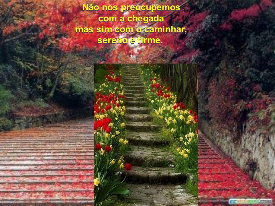Não nos preocupemos com a distância do caminho, mas sim, que saibamos apreciar tanto as flores, como os espinhos, rumo ao topo. Não nos preocupemos co