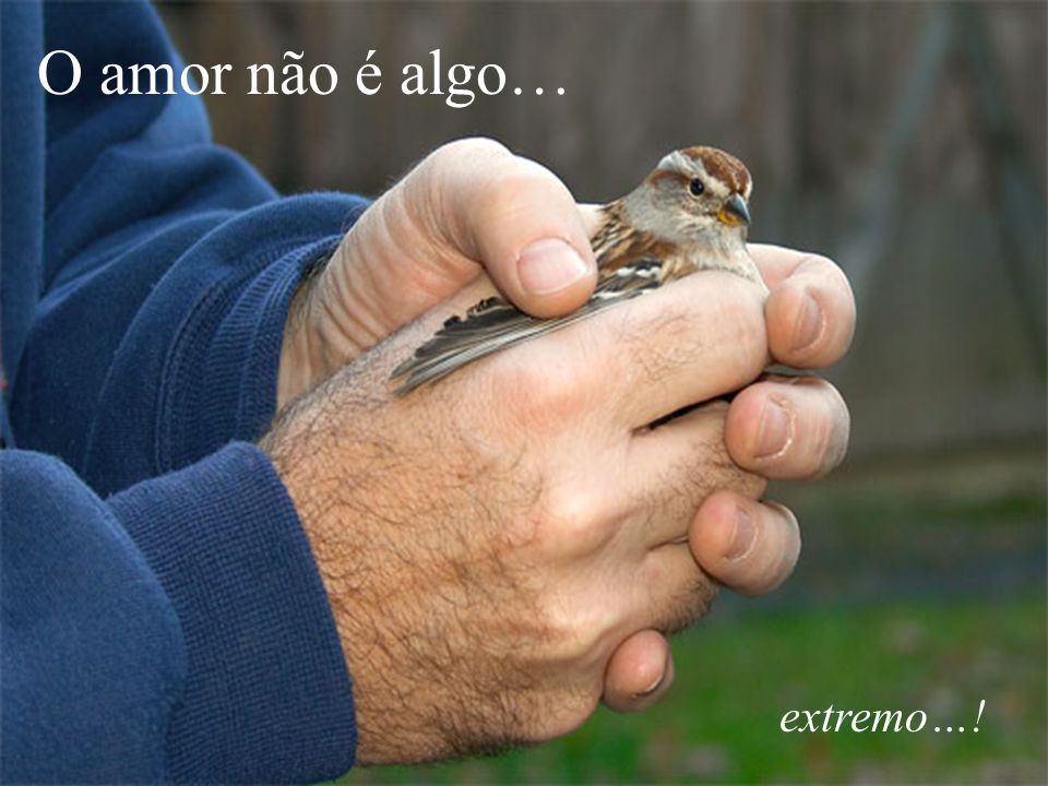 O amor não é algo… extremo…!