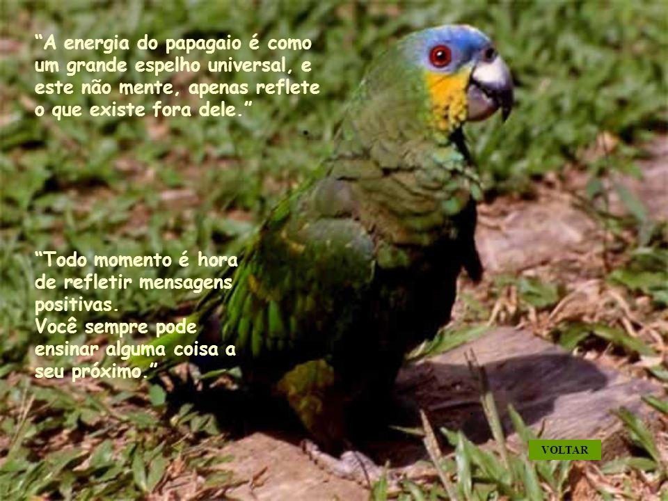 A energia do papagaio é como um grande espelho universal, e este não mente, apenas reflete o que existe fora dele. Todo momento é hora de refletir mensagens positivas.