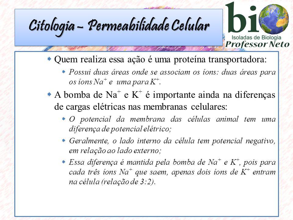 Citologia – Permeabilidade Celular  Quem realiza essa ação é uma proteína transportadora:  Possui duas áreas onde se associam os íons: duas áreas pa