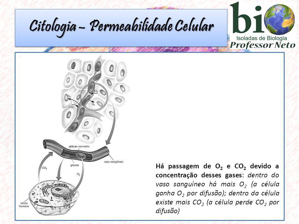 Citologia – Permeabilidade Celular Há passagem de O 2 e CO 2 devido a concentração desses gases: dentro do vaso sanguíneo há mais O 2 (a célula ganha O 2 por difusão); dentro da célula existe mais CO 2 (a célula perde CO 2 por difusão)