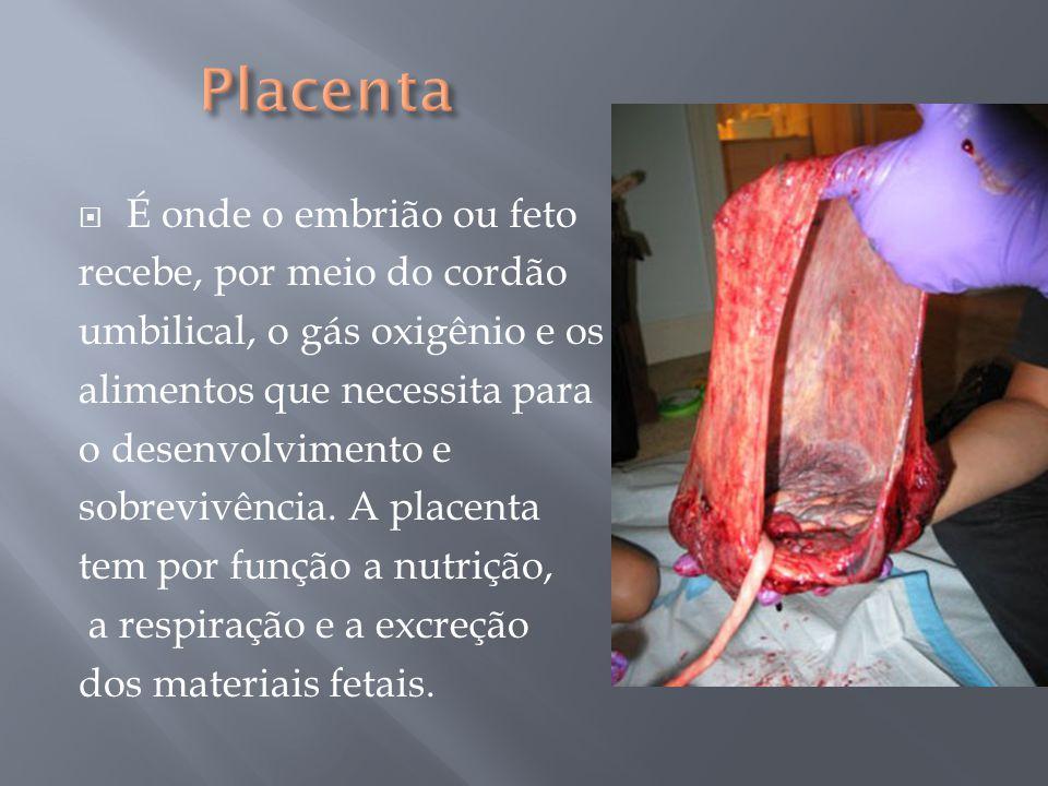  É onde o embrião ou feto recebe, por meio do cordão umbilical, o gás oxigênio e os alimentos que necessita para o desenvolvimento e sobrevivência. A